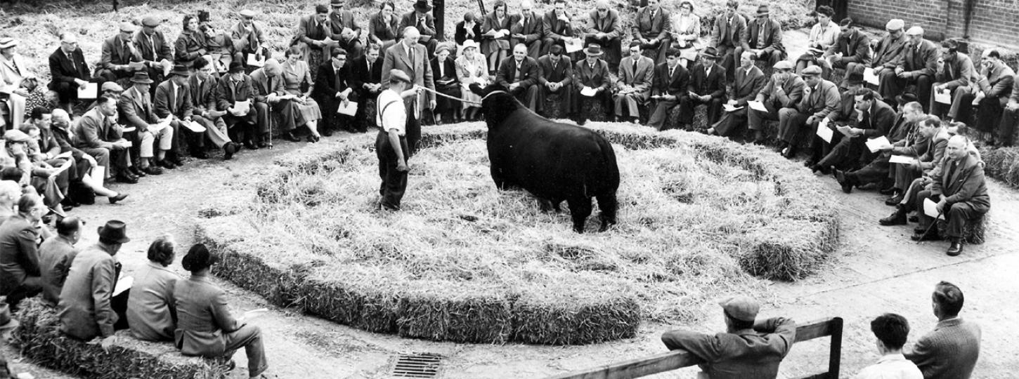 aberdeen angus history